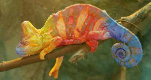 Chameleon - managing difficult situations
