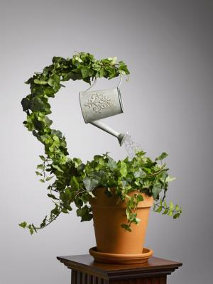 Self watering plant - we deliver sustainable results that your staff truely own